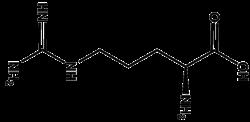 Arginina. Aminoácido