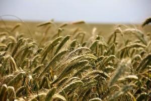 Agricultura y quiralidad